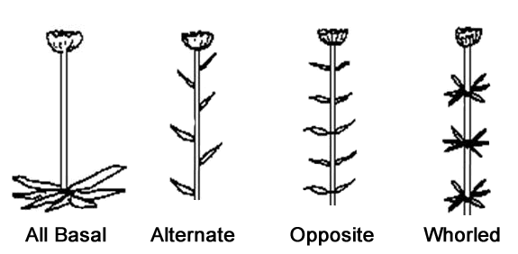 Leaf Arrangements
