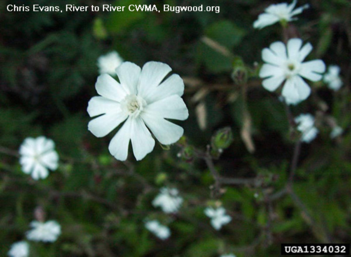 Washington State Noxious Weed Control Board